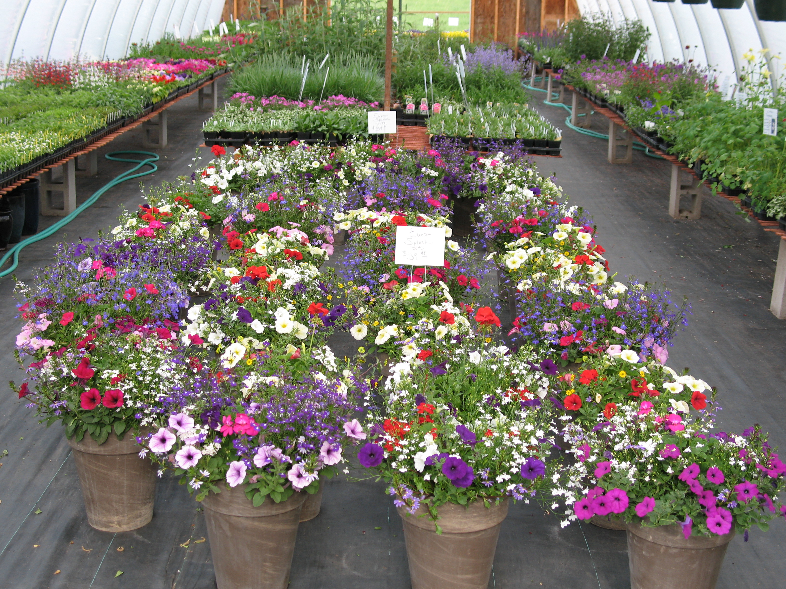 Beautiful flower pots shortgrass greenhouse for Beautiful planters